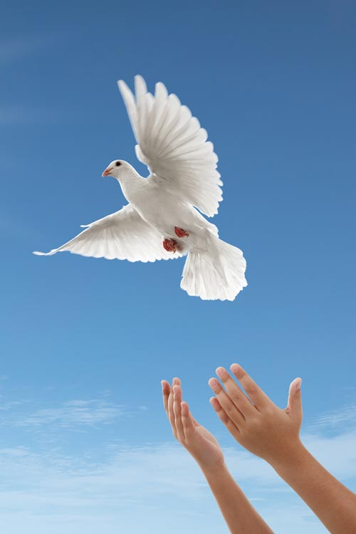 White Doves Released